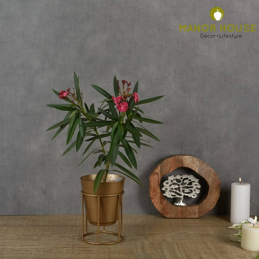 Get your hands on these handcrafted gold powdered planters. These planters can be used as a floor planters as well as table planters. Check out more at www.manorhouse.in . . . . . #planters #handcrafted #green #plants #plantlovers #gogreen #nature #decor #tableplanter #floorplanter #homedecor #oxygen #trees #plant #greenery #homestyling #design #antique